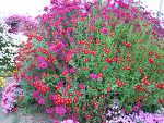 高知市春野の花めぐり