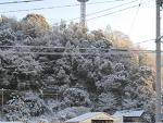 南国土佐の雪景色