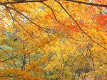 秋の紅葉 〜安居渓谷(やすいけいこく)〜