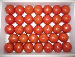 夜須町のフルーツトマト