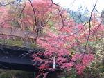 黒尊渓谷in紅葉