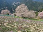 ひょうたん桜にて